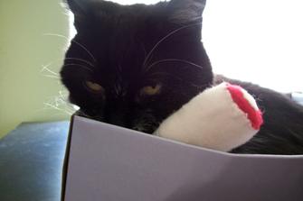 TT-KittyInBox